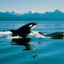 Go whale watching to see Orcas! I want to do this with my sister