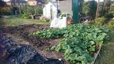 Getting into allotment life and hoping for at least one pumpkin! My first impressions.