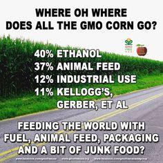 GMO corn: NOT FEEDING THE WORLD.   READ (latest available data): http://www.agmrc.org/commodities__products/grains__oilseeds/corn_grain/  #GMO #corn #RoundupReady #glyphosate #NotFeedingTheWorld #labelgmos #bangmos #needtoknowGMO #gmofreecanada #gmofreeusa