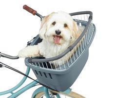 Hunde-Fahrradkorb online bestellen bei Tchibo 332187