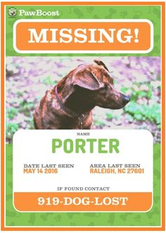 617a5ca581f 10+ Missing/Lost Pet Poster Templates | Word, Excel & PDF Templates Dog