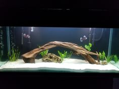 Aquarium Set, Freshwater Aquarium, Fish Tank, Google Images, Fresh Water, Fishbowl, Aquarium, Aquarium Fish Tank, Water Tank