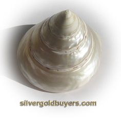 Iridescent Mother of Pearl Turban Shell. $14.50