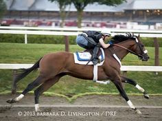 Fantastic photo from Saratoga this morning by Barbara Livingston of Mucho Macho Man preparing for the Whitney.