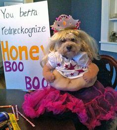 HILARIOUS!!!! Fun, Crazy Dog Halloween Costumes - Snappy Pixels