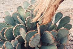 Let's travel to the desert, see all these spiny succulents up close and personal.