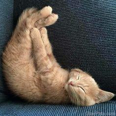 Tag yours friends who would love this!     #kucingbesar #cuturdaycatcafe #lovecatsforever #catlifes #gato_cats #kucingindonesia #kucingku #cutestcat #cutecatsofinstagram #funnycats #mainecooncat #catsgram #thedailykitten #kucinglucu #pedigree #petstagram #catholic
