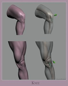 Drawing Anatomy Reference Wrapping up my first study of this new series on anatomy. When sculpting or drawing the knees, focus on the bone landmarks and structure… - Leg Anatomy, Anatomy Poses, Anatomy Study, Anatomy Art, Girl Anatomy, Face Anatomy, Human Anatomy Drawing, Human Body Anatomy, Leg Reference