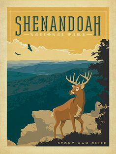 Shenandoah National Park - Anderson Design Group has created an award-winning series of classic travel posters that celebrates the history and charm of America's greatest cities and national parks. Founder Joel Anderson directs a team of talented Nashville-based artists to keep the collection growing. This print celebrates the spectacular vistas of Shenandoah National Park.