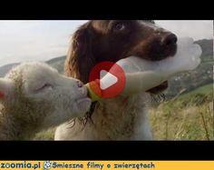Psi opiekun Śmieszne Filmy Psy http://Zoomia.pl