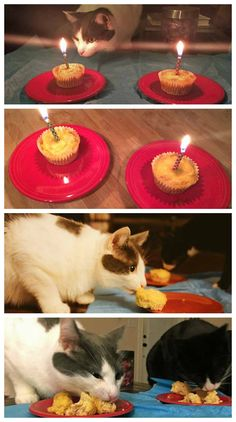 cat birthday cake for cats - cat birthday cake for cats ; cat birthday cake for cats party ideas ; cat cake for cats birthday parties Birthday Cake For Cat, Animal Birthday, Birthday Cakes, Crazy Cat Lady, Crazy Cats, Homemade Cat Food, Diy Food, Food Ideas, Pets