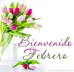 bienvenido+febrero+mes+del+amor+tulipanes+de+colores