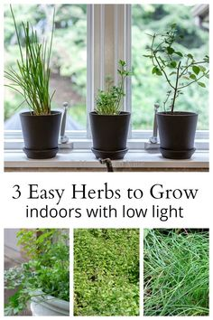 Indoor Gardening Learn about three of the easiest herbs to grow indoors with low light, and how to care for them through winter. - Learn about three of the easiest herbs to grow indoors with low light, and how to care for them through winter.