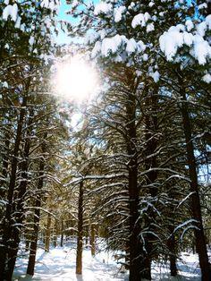 travelhikepsych:    Flagstaff, Arizona