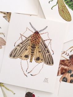 Anna Tiger Moth miniature small watercolor painting