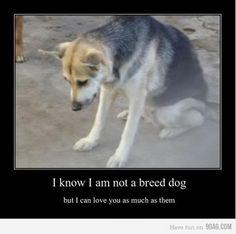 Adopt. Seriously..