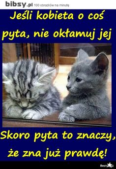 Bibsy.pl - 100 obrazków na minutę Animal Pictures, Funny Pictures, Weekend Humor, Funny Mems, Man Humor, Really Funny, True Colors, Motto, Memes