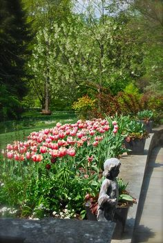 Tulips around Chanticleer in April