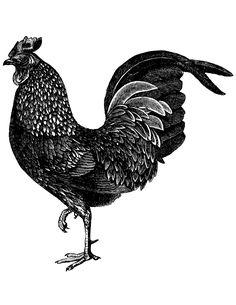 Vintage Image of a Chicken – Click for printable art @ Vintage Fangirl