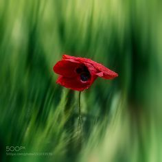 Red and green by nerion Fine Art Photography #InfluentialLime