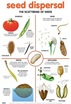 seed dispersal. simple diagram of different types.