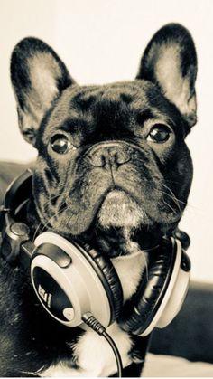 #frenchiebulldog#carlabikini