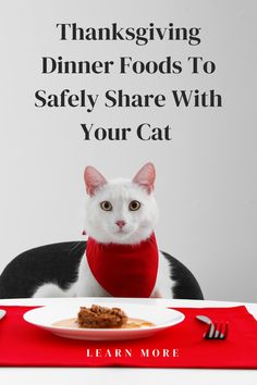 Want to share some Thanksgiving goodies with your cat? We've given some cat safe goodies to share