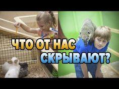 МЕНЯ ВЗБУДОРАЖИЛА ЖЕСТОКАЯ ПРАВДА О КОНТАКТНЫХ ЗООПАРКАХ! - YouTube Youtube, Videos, Animals, Animales, Animaux, Animal Memes, Animal, Video Clip, Animais