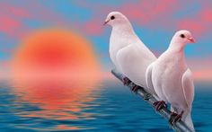 A beautiful picture of Two #White_Bird downloaded from http://alliswall.com