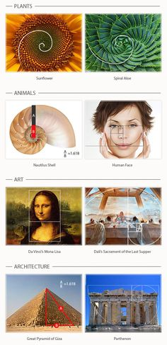 How to Use the Golden Ratio to Create Gorgeous Graphic Designs - See more at: http://www.companyfolders.com/blog/golden-ratio-design-examples#sthash.81OxGfxw.dpuf