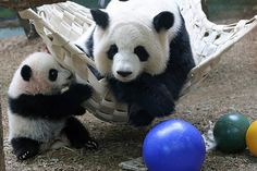 smileybears Hey Mommy...Mommy...Mom...Ma...  Mei Huan and Lun Lun - 12/27/13