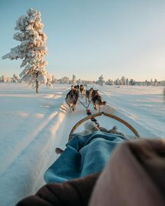 Second highlight of 2018 was Lapland in Finland! The most beautiful place to be in February if you're looking for Winter wonderland❄️ Husky… Carpe Diem, Vacation Places, Places To Travel, Vacations, Husky, Winter Wonderland Decorations, Highlights, Finland Travel, Winter Landscape