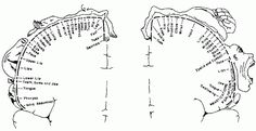 Original diagram of the sensory and motor homunculi, from Penfield & Rasmussen, 1950).
