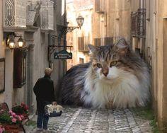 ... perchè un gatto ha veramente il potere di riempire la tua vita ...
