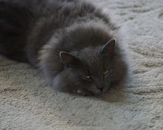 Fluff (our kitty)