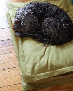 After a shower here comes a lazy bed day  #pattifurry #lazy #dogbed #hundebett #bed #interiordesign #germandesign #rescuedog #organic #berlindesign #stylish #sleepy #design #dogaccessories #hund #dog #straydog #honden #perros #cane #chien #dogbeds #tibetanterrier #tibetan #weeklyfluff #lovemydog
