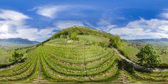 360° hoch über den Tulpen des Günter Bologna - 360° Foto