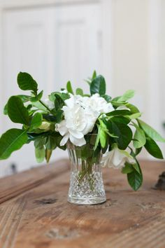 Use glass carafes for gardenia arrangements. Gardenias are the most sophisticated of the white flowers. Its elegance is unsurpassed, and the fragrance is so unique it triggers beautiful memories. Simple Flowers, Cut Flowers, White Flowers, Beautiful Flowers, Beautiful Bouquets, Gardenia Bush, Gardenias, White Gardenia, Beautiful Gardens