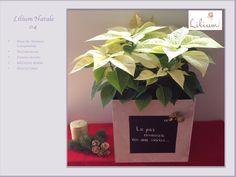 LOS MEJORES ARREGLOS FLORALES A DOMICILIO. En esta temporada navideña, decore su hogar con arreglos florales únicos. En Lilium somos diseñadores florales, expertos en llenar su hogar de alegría con hermosas flores. Le invitamos a ingresar a nuestra página en internet www.lilium.mx, para que pueda conocer nuestras colecciones y elija el diseño que más le agrade. #losmejoresarreglosfloralesadomicilio