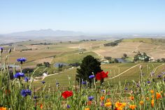 Full-Day Stellenbosch Wine Safari and Wine Tasting Voyage Private Tour Wine Safari, Wine Tasting, Day Trips, 4x4, Golf Courses, Dolores Park, Tours, Gardens, Travel