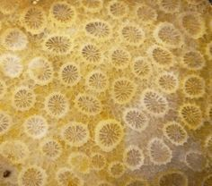 Fossilized Coral, Home Decor, Decoration Home, Room Decor, Home Interior Design, Home Decoration, Interior Design