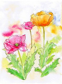 Pen and wash poppies.
