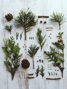 Little native specimens. #grid01 | Jakfruit | VSCO Grid