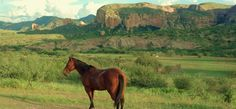 Los Banos Ranch, , Mexico - Guest Ranch Vacation | Top50 Ranches