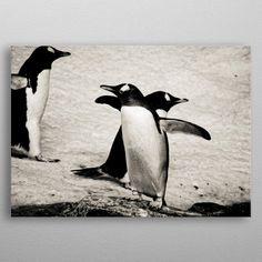 Penguins by Daniel Gaudin Wall Art Prints, Canvas Prints, Penguins, Canvas Art, Wall Decor, Posters, Fine Art, Metal, Animals