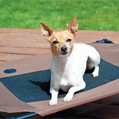 Cooling Dog Cot
