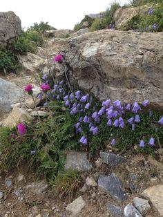 Die Natur ist der beste Florist!  www.hotelauszeit.ch www.facebook.com/hotelauszeit www.instagram.com/hotelauszeit