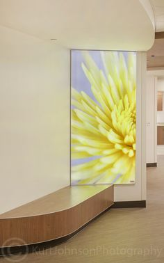 Large scalebotanicals install shots, Mother Baby Hospital Center- Minneapolis http://www.kurtjohnsonphotography.com/