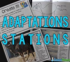 biology ideas Adaptations Stations- 9 fun stations to help students practice identifying structures and functions of structural adaptations (from The Science Penguin) Science Penguin, Animal Science, Science Biology, Teaching Biology, Science Lessons, Science Education, Science Activities, Life Science, Physical Education