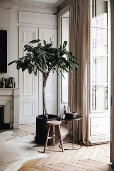 Encantador This is Home - Natalie Walton Photography © Chris Warnes Interiores inspiración . Interior Design Kitchen, Home Design, Interior And Exterior, Interior Decorating, Tree Interior, Interior Plants, Studio Interior, Kitchen Decor, Studio Design